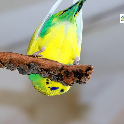 Vogelspielzeug