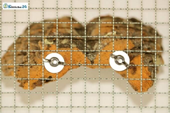 Sittiche24 versendet das für Ihre Vögel ausgesuchte Korksitzbrett für Ihren Vogelkäfig innerhalb von wenigen Werktagen per Post zu Ihnen nach Hause zum Beispiel nach Erfurt, Münster, Dresden oder Würzburg. Korksitzbretter nutzen Wellensittiche, Kanarienvögel, Sperlinge oder Nymphensittiche und nahezu alle Vogel Haustierarten liebend gerne als Sitz-, Ruhe- und Spielplatz sowie als begehrtes Knabbermaterial. Als Liege- und Ruheplattform mögen unsere Ziervögel die Oberfläche der Korksitzbretter, da die Naturkorkoberfläche gut isoliert ist und somit angenehm warmhält. Nicht nur Wellensittiche liegen gerne auch mal bäuchlings auf dem Korksitzbrett, zusätzlich nutzen unsere Hausvögel mit Fuß- bzw. Beinproblemen das Korksitzbrett, um stark beanspruchte Körperzonen zu entlasten. Dieses naturbelassene Korksitzbrett erhalten Sie mit vormontierter Stockschraube und Befestigungsmaterial montagefertig für Ihren Vogelkäfig oder Ihre Voliere. Unsere Korksitzbretter können Sie bequem über unseren Vogelshop bestellen.