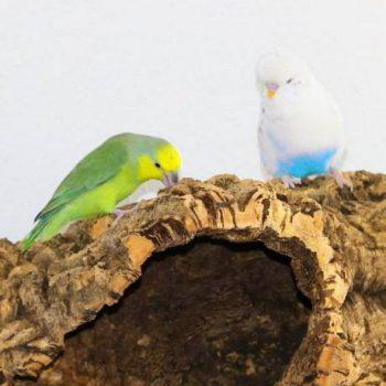 Gesundes Vogelzubehör mit Beschäftigungsgarantie.