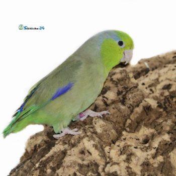 Vogelzubehör für Papageien.