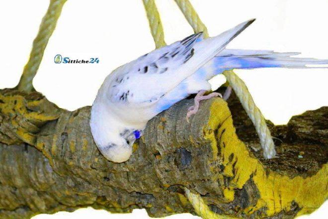 Vogelspielzeug Naturkork für Wellensittiche.
