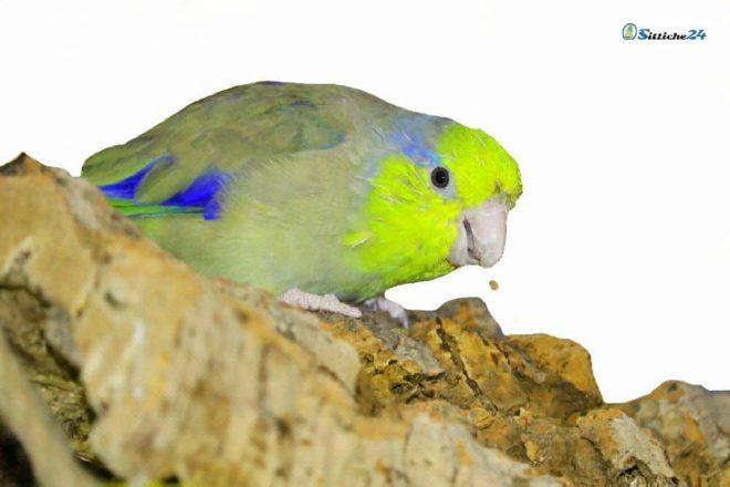 Vogelzubehör Rindenkork.
