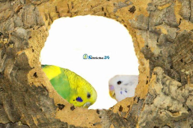 Vogelzubehör für gesunde Vögel. Naturkork begeistert aufgrund seiner einzigartigen Beschaffenheit jeden Wellensittich, Sperling, Nymphensittich, Papagei oder Kanarienvogel. Naturkork ist perfekt zum Beknabbern und eignet sich deshalb bestens für die Schnabelpflege Ihrer kleinen Piloten. Gleichzeitig haben Ihre Vögel spannende Beschäftigungsmöglichkeiten, da sie zum Beispiel auf einer Vogelschaukel aus Naturkork ihrem Kletter- und Spieltrieb ausgiebig nachgehen können. Für Abwechslung im Vogelkäfig oder der Voliere ist mit Naturkork immer gesorgt.