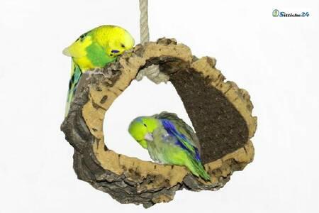 Günstige Korkschaukeln als Ruhe- und Spielplatz für Vögel.