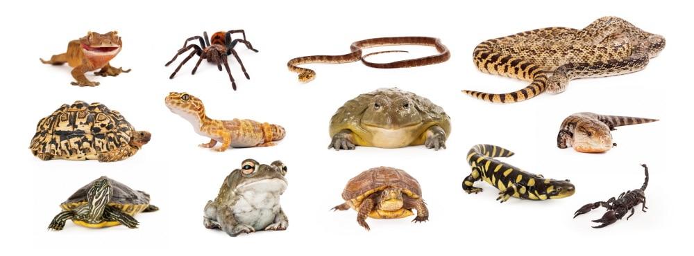 Käfig Reptilien und Gliederfüßer einrichten.