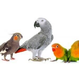 Kork für Vogelkäfige & Volieren