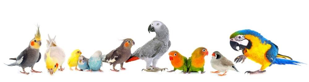 Kork ist perfektes Zubehör für Vogelkäfige und Volieren.