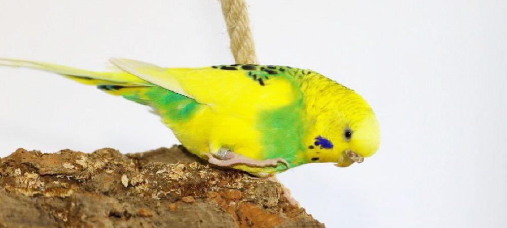 Natürliches Vogel- und Terrarium Zubehör günstig kaufen.