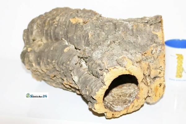 Rennmaus Käfig Ausstattung? Korkröhren sind exzellentes Zubehör für Nagerkäfige. Rennmäuse mögen die Korkoberfläche zum Erkunden und das Naturkork lässt sich wunderbar beknabbern. Korkröhren sind ausgezeichnete Verstecke und Rückzugsorte für Ruhephasen.
