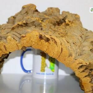 """Zubehör Chamäleons. Korkröhren und Naturkorkprodukte sind für Chamäleons hervorragendes Terrarienzubehör, da sie Ihren Lebensraum vorwiegend in bewaldeten Regionen in warmen Zonen bestreiten. Chamäleons zählen zur Familie der """"Leguanartigen"""" und besiedeln naturgemäß den afrikanischen Kontinent, einschließlich Madagaskar. Als Busch- und Baumbewohner mögen Chamäleons Naturkork in Ihrer Terrarieneinrichtung besonders, so dass Korkröhren, Korkplatten oder Korktunnel sicherlich zu der Spitzenausstattung in der Chamäleon Haltung zählen. Der gesamte Körper der """"Echten Chamäleons (Unterfamilie)"""" ist für ein Leben in den Bäumen ausgerichtet. Leider sind fast alle der rund 200 Chamäleon Arten in Ihrer natürlichen Lebensumgebung gefährdet, so dass sie unter das Washingtoner Artenschutz-Übereinkommen fallen."""