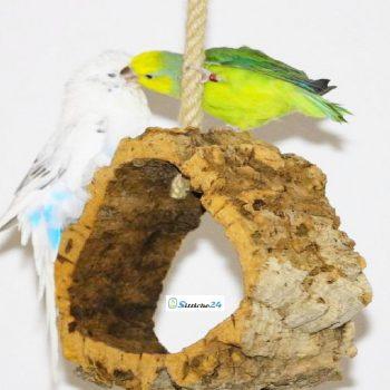 Vogelschaukel für Wellensittiche und Sperlingspapageien.