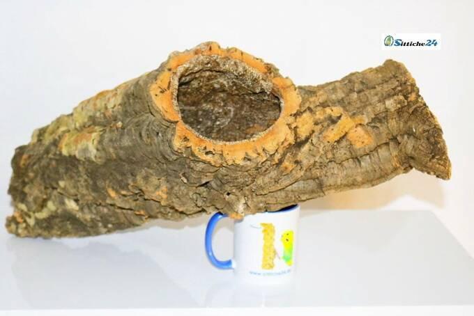 Was mögen Zwergkaninchen? Korkröhren sind perfekt geeignet als Einrichtung für Nagerkäfige und Gehege. Zwergkaninchen mögen die Enge einer Korkröhre und den Unterschlupf, den sie bietet.