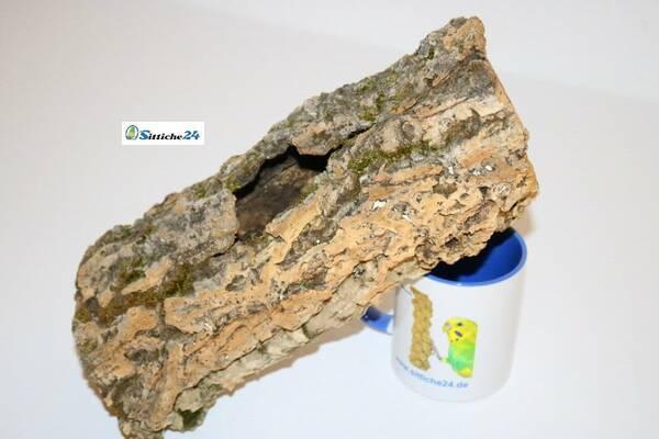 Ausstattung Agame Terrarium. Kork eignet sich ausgezeichnet für die artgerechte Haltung von Agamen, da sie naturbedingt Wälder, Steppenlandschaften und Wüstengebiete bewohnen.