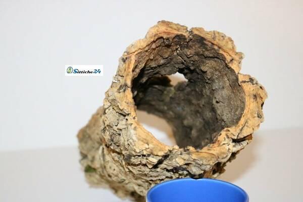 Ausstattung Eidechsen Terrarium. Naturkork eignet sich für Eidechsen besonders, da es exzellente Kletter- und Unterschlupfmöglichkeiten bietet.
