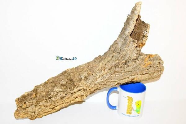 Zubehör Bartagame. Die zur Gattung der Schuppenkriechtiere gehörenden Bartagamen zählen derzeit 8 Arten, wozu beispielsweise auch die kleinen Bartagamen und Zwergbartagamen gehören. Bartagame stammen aus Australien und sind Allesfresser. Ihre Nahrung sind etwa Schnecken, Käfer, Würmer aber auch Früchte, Blüten und Blätter. Bartagame verbringen Ihre Zeit gerne auf Baumstümpfen, Baumstämmen und Zaunpfählen, so dass Korkröhren Ihrem natürlichen Lebensraum sehr ähneln. Die meisten Bartagamen leben in australischen Baum- und Buschbeständen - Naturkork bietet sich dementsprechend als Terrarieneinrichtung ausgezeichnet an!
