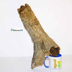 """Zubehör Chamäleons. Korkröhren und Naturkorkprodukte sind für Chamäleons hervorragendes Terrarienzubehör, da sie Ihren Lebensraum vorwiegend in bewaldeten Regionen in warmen Zonen bestreiten. Chamäleons zählen zur Familie der """"Leguanartigen"""" und besiedeln naturgemäß den afrikanischen Kontinent, einschließlich Madagaskar. Als Busch- und Baumbewohner mögen Chamäleons Naturkork als Terrariumausstattung besonders, so dass Korkröhren, Korkplatten oder Korktunnel zum Spitzenzubehör in der Chamäleon Haltung zählen. Der gesamte Körper der """"Echten Chamäleons (Unterfamilie)"""" ist für ein Leben in den Bäumen ausgerichtet. Leider sind fast alle der rund 200 Chamäleon Arten in Ihrer natürlichen Lebensumgebung gefährdet, so dass sie unter das Washingtoner Artenschutz-Übereinkommen fallen."""