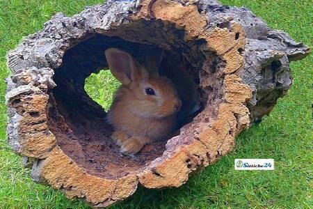 Nagetiere Zubehör Naturkork. Egal, ob Kaninchen, Meerschweinchen, Streifenhörnchen, Hamster, Degus & Co - alle Nager lieben Kork zum Klettern, Knabbern und als Versteck- oder Ruheplatz!