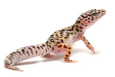 Geckos Zubehör