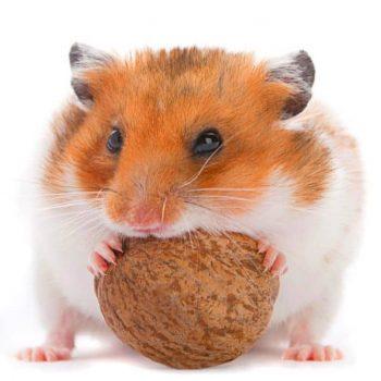 Hamster Zubehör Ausstattung Bedarf