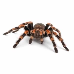 Spinnen & Gliederfüßer