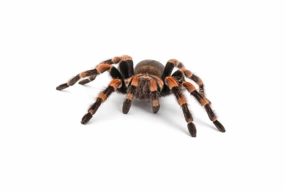 Spinnen Zubehör Ausstattung Bedarf - Naturkork als idealer Unterschlupf! Korkröhren und Korktunnel sind nahezu unerlässlich in der Spinnentierhaltung!