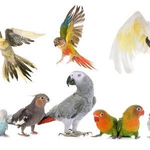 Korkröhren & Tunnel für Vögel