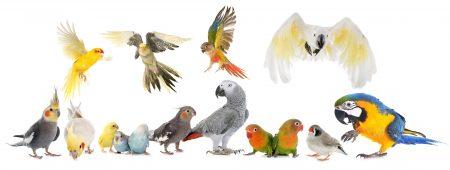 Vogelzubehör - Vogelbedarf - Vogelausstattung / Naturkork als Ruhe-, Spiel- und Futterplatz für Wellensittiche, Sperlingspapageien, Kanarienvögel & Co.