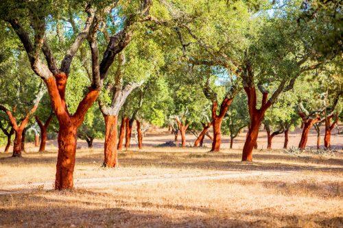 Kork Wald Portugal