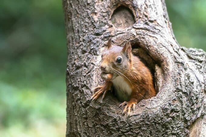 Eichhörnchen Erstausstattung. Nagetiere Zubehör Naturkork. Egal, ob Hamster, Eichhörnchen, Degus & Co - alle Nager lieben Kork zum Klettern, Knabbern und als Versteck- oder Ruheplatz!