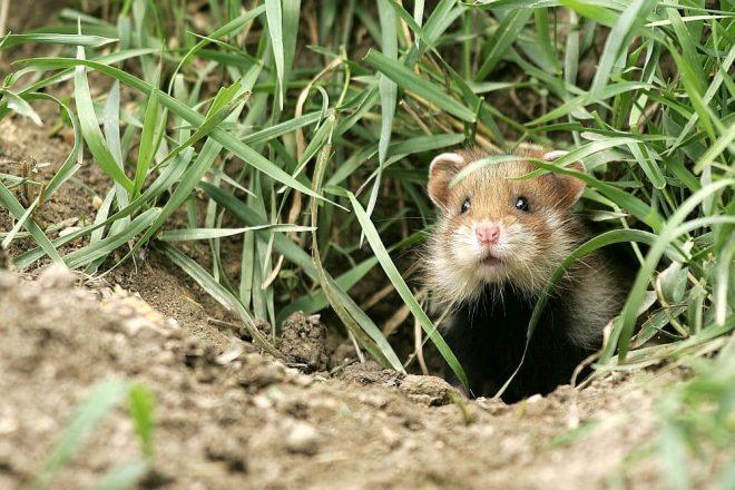 Hamster naturgerecht ausstatten. Korkröhren & Korktunnel bieten Hamstern perfekte Kletter-, Knabber-, Spiel- und Versteckmöglichkeiten✅!