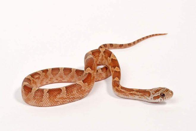 Terrarium einrichten für Schlangen. Naturkork in vielen verschiedenen Ausführungen und Größen! Korkröhren, Korktunnel & Korkäste!