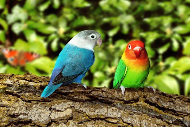 Papageien, Wellensittiche & Kanarienvögel lieben Naturkork. Vögel brauchen eine natürliche Umgebung, um sich wohl zu fühlen.