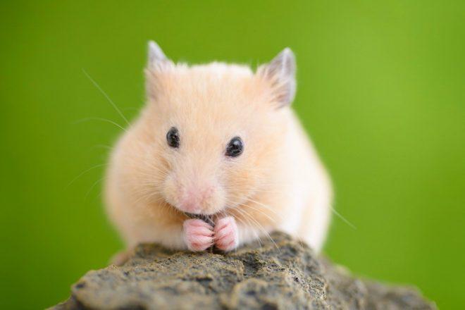 Hamster Käfigzubehör Naturkork. Korkröhren, Korktunnel und Korkplatten passen sich den natürlichen Lebensräumen von Hamstern perfekt an!