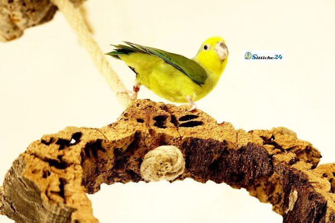 Naturkork Schaukel in geschlossener Ringform mit Hanfseil zum Klettern! Vogelschaukeln und Sitzbretter aus Naturkork in unserem Shop.