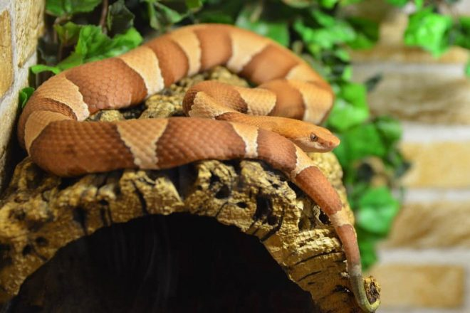 Naturkork für Schlangen. Für fast jede Terrarien Ausstattung ist Kork unverzichtbar. Korkröhren & Korktunnel in verschiedenen Ausführungen.