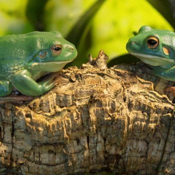 Terrarium für Frösche einrichten mit Naturkork. Wir freuen uns über Ihren Besuch unseres Naturkork Shops. Korkröhren etc. für Reptilien & Co.